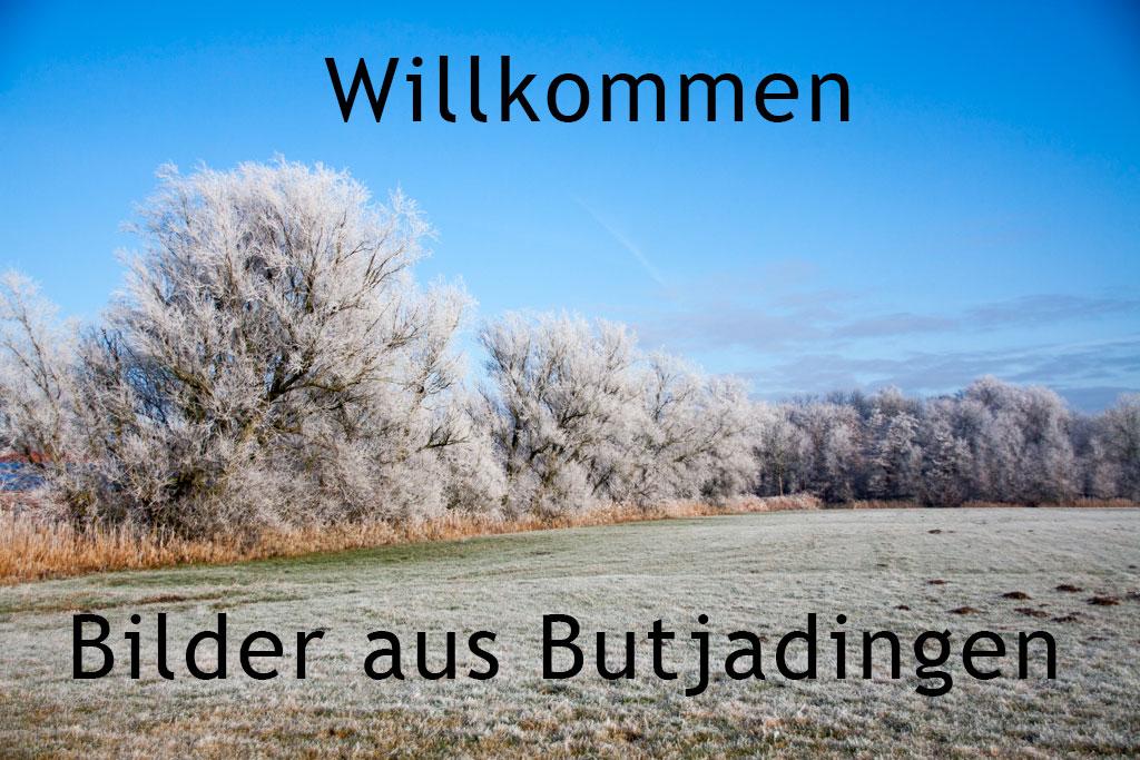 willkommen-frost